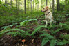 Dog, Ferns and a Mushroom