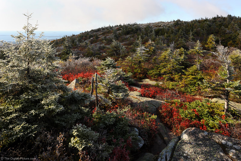Fall Hoar Frost on Cadillac Mountain, Acadia National Park