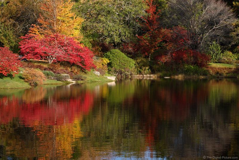 Asticou Azalea Garden - Northeast Harbor, Maine