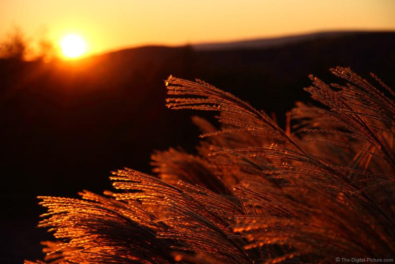 Sunset Over maiden Grass Plumes