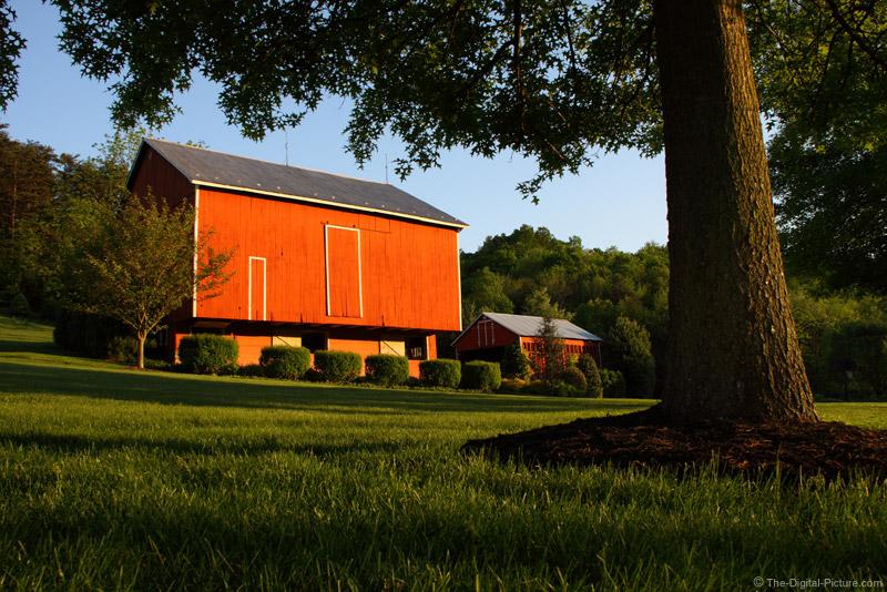 Red Barn and Pin Oak Tree