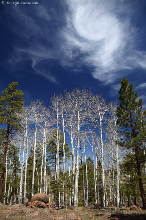 Rt 12, Dixie National Forest