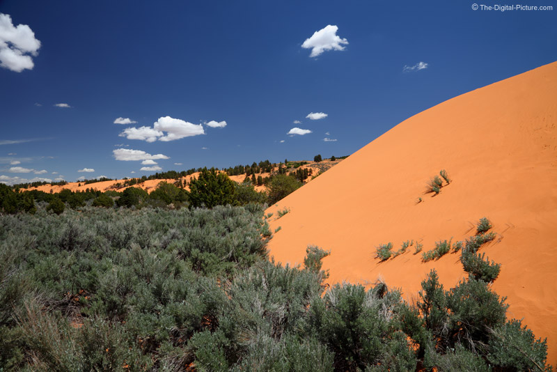 Dune at Coral Pink Sand Dunes SP