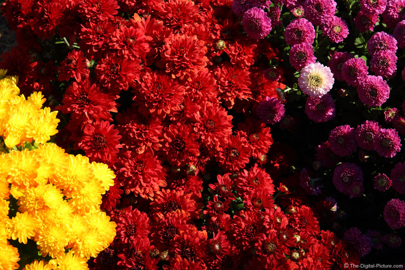 Patterns in Mums