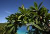 Tropical Foliage, St. John