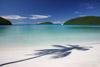 Maho Bay Palm Tree Shadow
