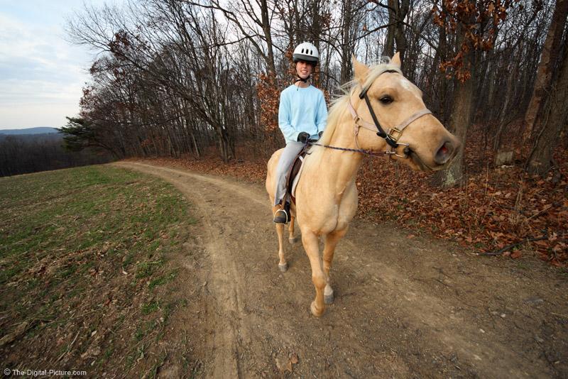 Riding an American Quarter Horse
