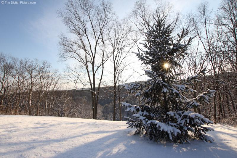 Sun Shining Through Snow-Covered Fir Tree