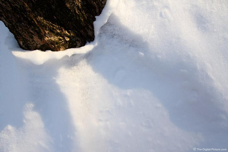 Melting Snow Peeling from Tree Trunk