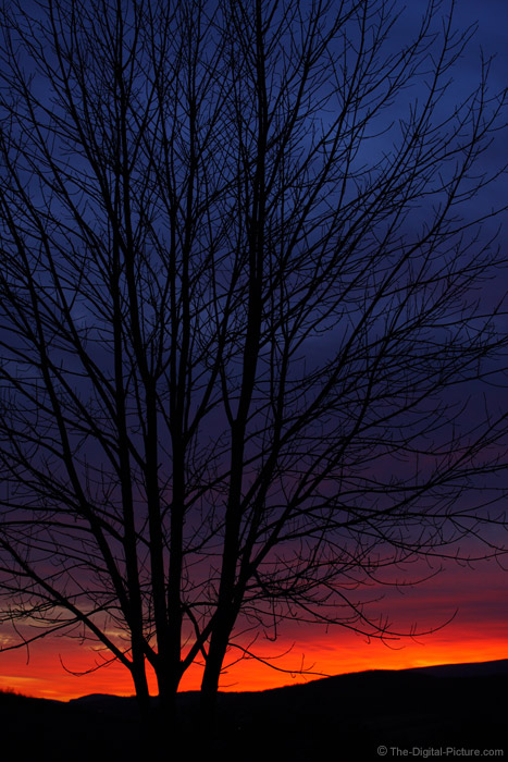 Sunset Behind Branches
