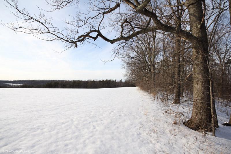 Big Oak Frames Snowy Field