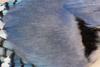 Unique Blue Jay Perspective