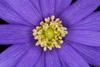 Macro Ring-Flashed Flower
