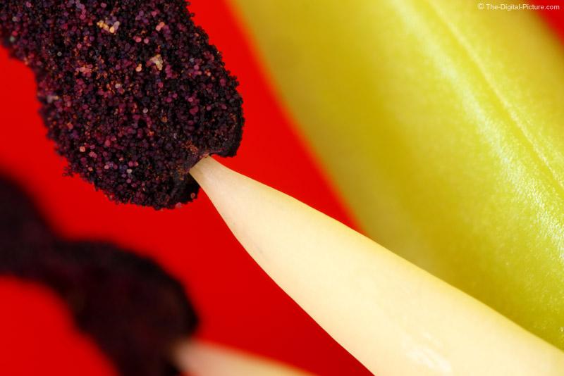 Tulip Stamen Picture