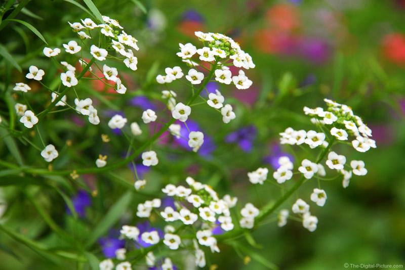Greenhouse Studio Flower Picture