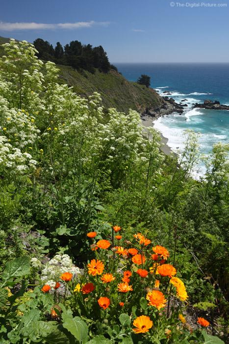 California Wildflowers, Big Sur