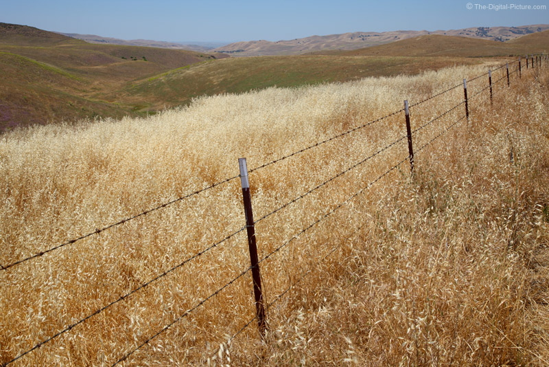Paso Robles Oats and Pasture