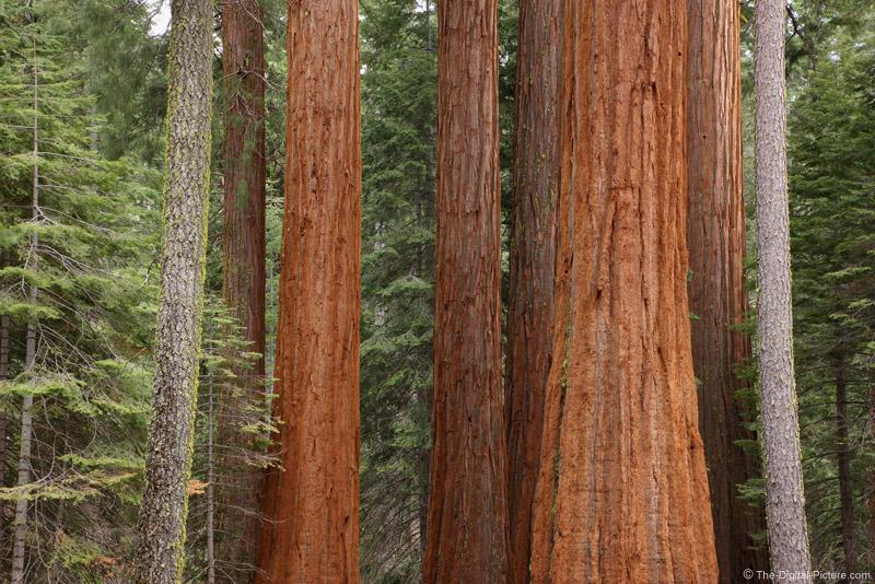 Lower Mariposa Grove, Yosemite National Park