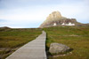 Boardwalk at Logan Pass