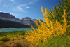 Fall Color at Lake Sherburne, Glacier National Park