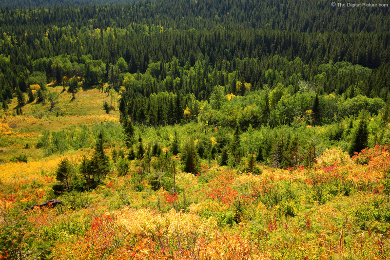 Brilliantly Colored Glacier National Park Foliage
