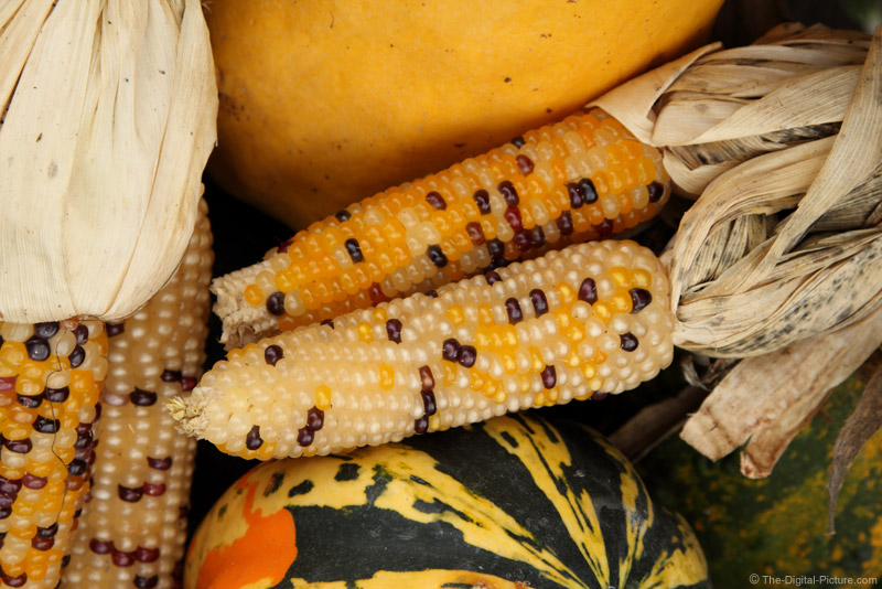 Colors of the Fall Harvest