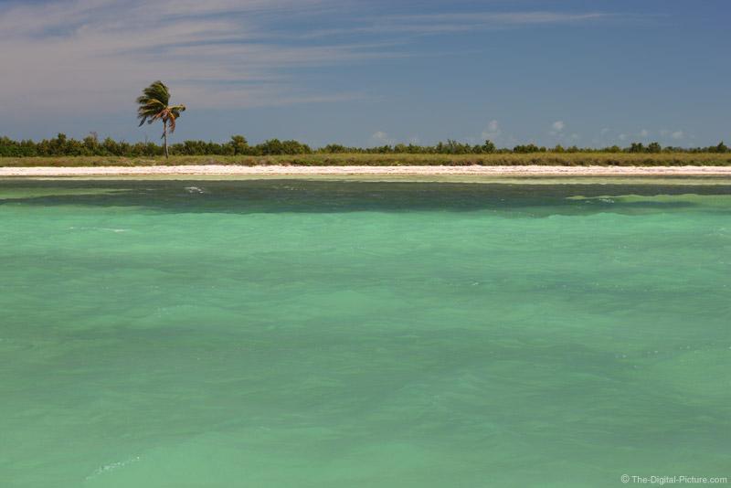 Boca Grande Key, Florida Palm Tree