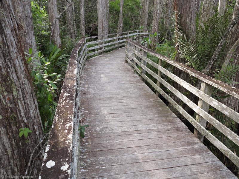Corkscrew Swamp Wildlife Refuge