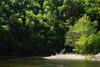 Loyalsock Creek flows through Worlds End SP