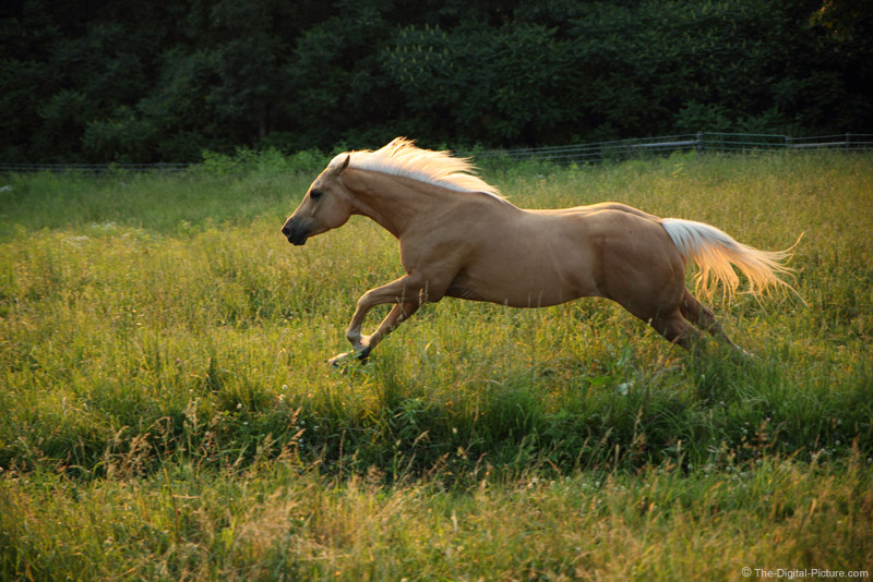 Horse Running Wildly