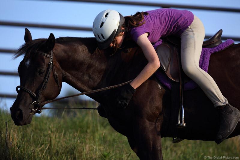 She Loves Horses