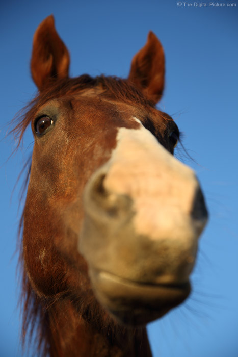 Horse Head Close-Up Picture