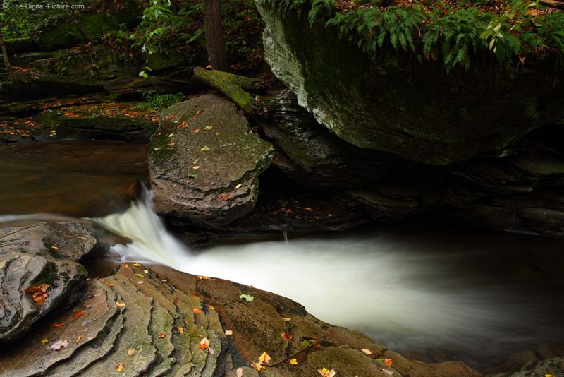 Fern-Covered Rock, Ricketts Glen State Park