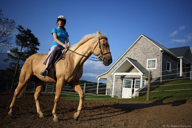 Riding the Palomino Quarter Horse