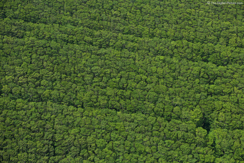 Grove of Trees - Aerial View