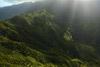 Kauai Rain Forest