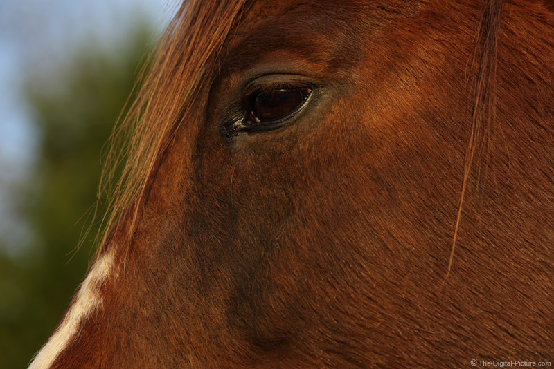 Eye of the Brown Horse