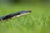 Bugged Snake