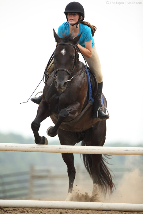 Horse Jumping Action
