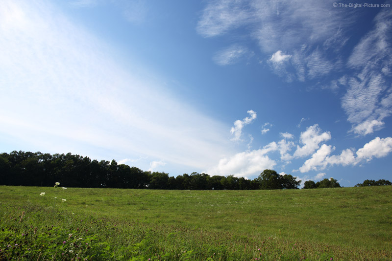 The Pasture