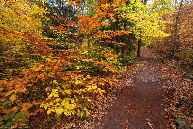 Highland Trail, Ricketts Glen State Park