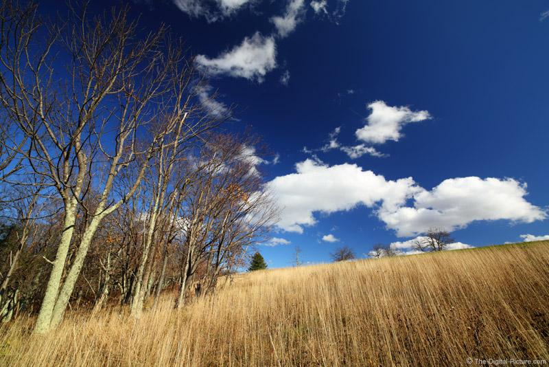 Big Meadows Grass and Oaks