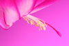 Christmas Cactus Flower: Background Color by Gel