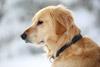 Dog Head Shot Portrait