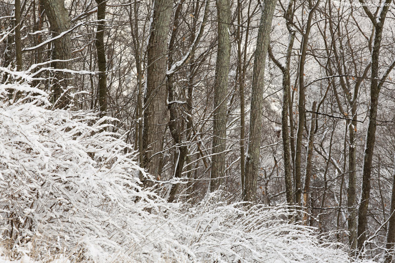 A Winter Woods
