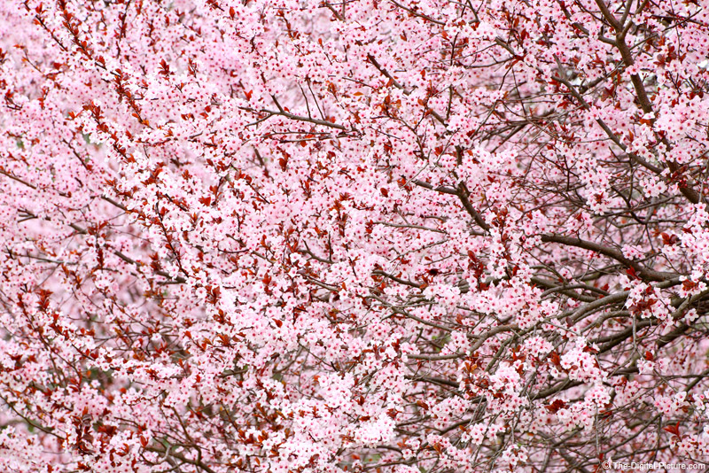 Spring Photography Tips: Photographing Flowering Trees