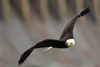 Canon 7D II Captures Bald Eagle in Flight at Conowingo Dam