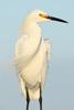A 5-Step Recipe for Bird Photography Success