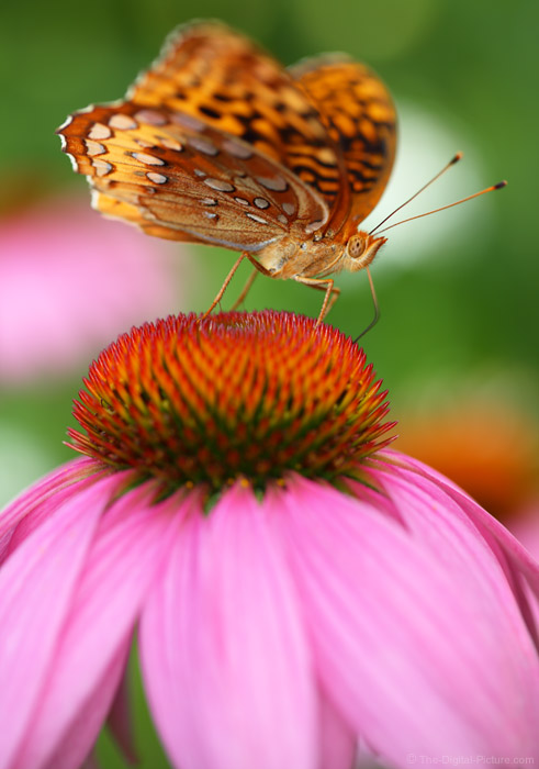 Summer Photography Tips: Plant for Butterfly and Flower Pictures