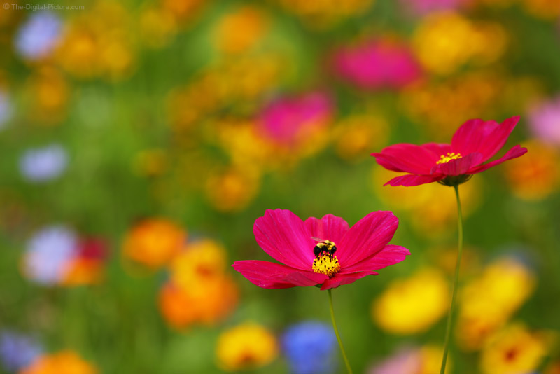 Summer Photography Tips: Telephoto Lenses are for Flowers Too